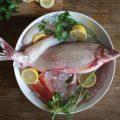 تشخیص ماهی سالم و تازه